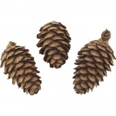 Japanese larch cones, natural, 50g