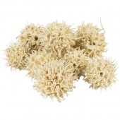 Sweetgum-Fruit bleached 30g