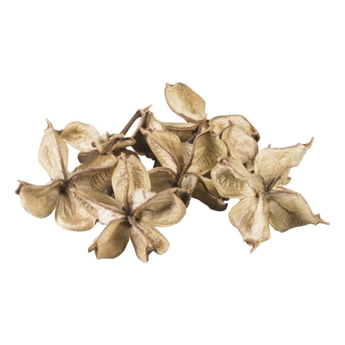 Cotton Husks, 20g