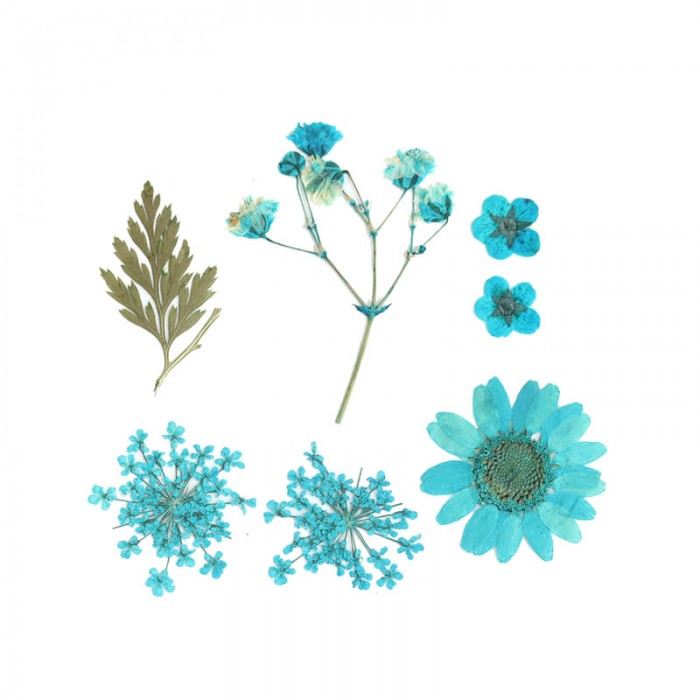 Assorted dried / pressed flowers, blue