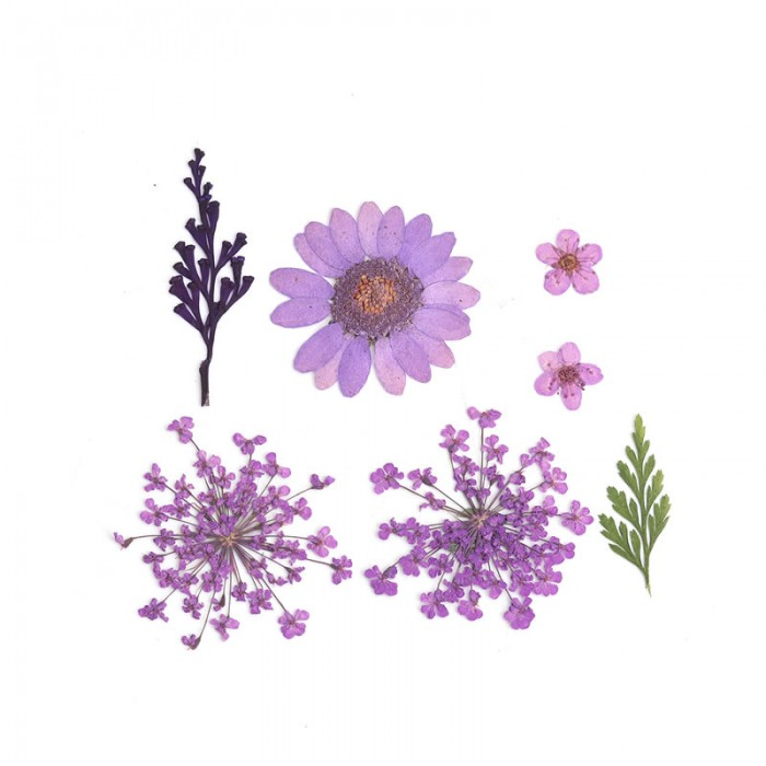 Assorted dried / pressed flowers, lilac
