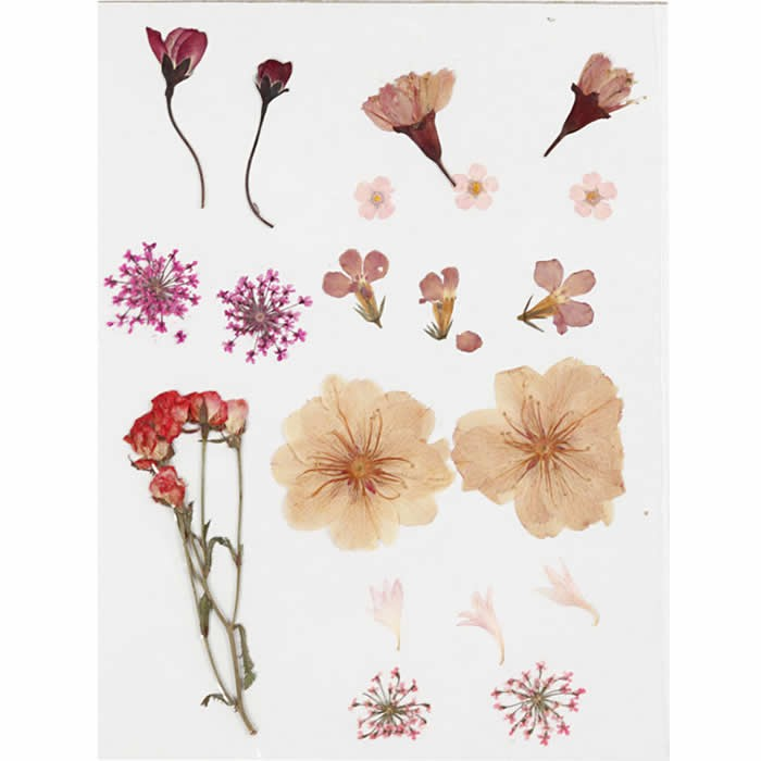 Assorted dried / pressed flowers, pink