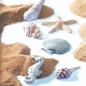 Shells mould, 6 shapes 6x6cm