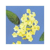 Mini fleurs et feuilles, jaune