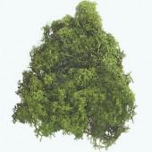 Islandmoss, dark green, 50g