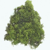 Mousse d'Islande vert foncé 50g