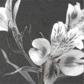 Serviette fleurs noir-blanc, 1 pièce