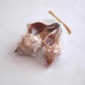 Assortiment de coquillages 10-12cm, 2 pièces