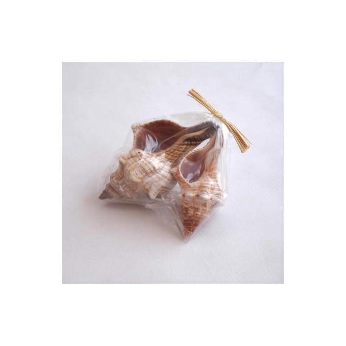 Shell mix 10-12cm, 2 pces