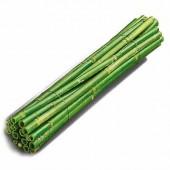 Tiges canna, 40cm, 5 pièces, vert
