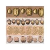 Serviette Golden Nuts, 1 pièce