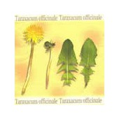 Napkin dandelion, 1 piece