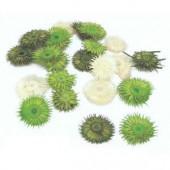 Diestelscheiben weiss-grün, 30g