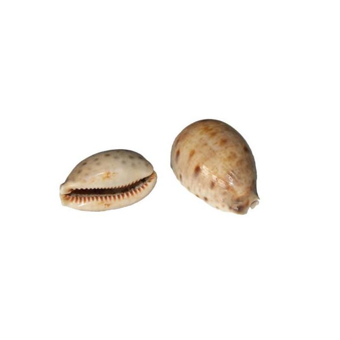 Shells 45-50mm, 2 pces
