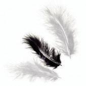 Marabu feathers, black mix, 15 pcs, 10cm