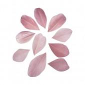 Plumes coupées, 5-6cm, vieux rose, 36pcs