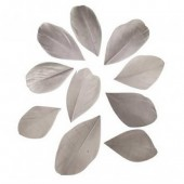 Feathers cutted, 5-6cm, light grey, 36 pcs